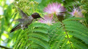 hummingbird 1 by dhiren2
